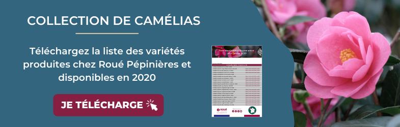 bandeau blog telechargement camelias